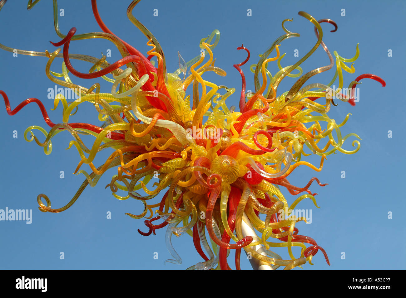 dale chihuly essay Dale chihuly (b 1941) chihuly: an artist collects includes an essay by chihuly's longtime friend.