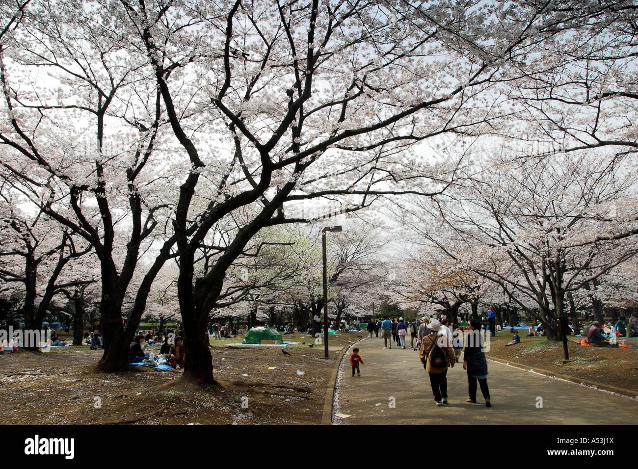 stock photo tokyo japan travel sakura garden pink flower bridge pool bridge