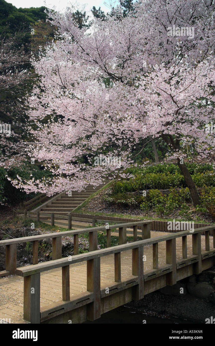 Japanese Garden Cherry Blossom Bridge tokyo japan travel sakura garden pink flower bridge pool bridge