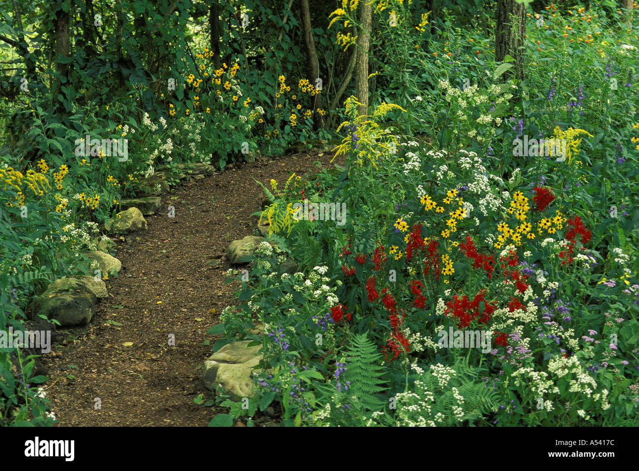peaceful-path-in-shady-native-wildflower-garden-midwest-usa-A5417C Native Wildflower Garden Designs on wild garden design, herb garden design, cactus garden design, organic garden design, sand design, gravel design, small garden design,