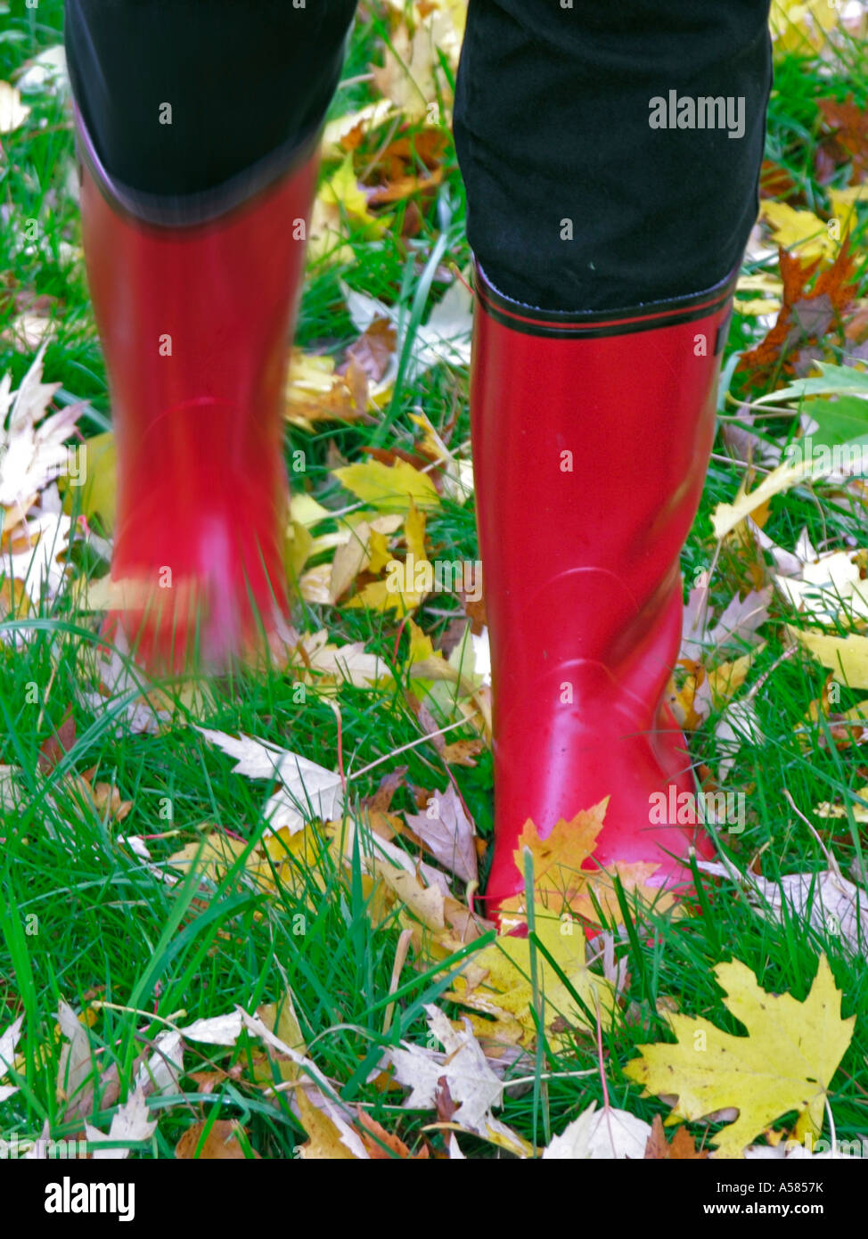 Legs in red rubber boots on grass with coloured autumn leaves Stock ...