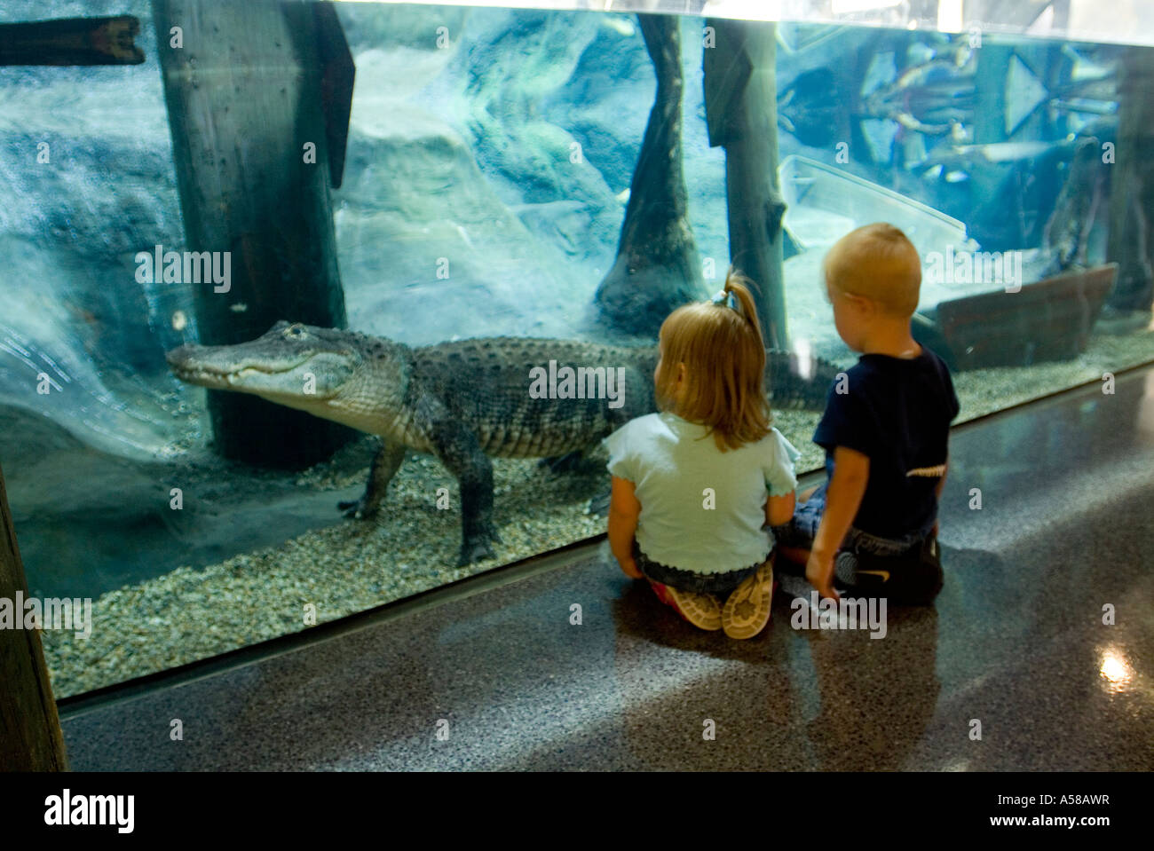 Kids Looking At An Alligator In The National Mississippi