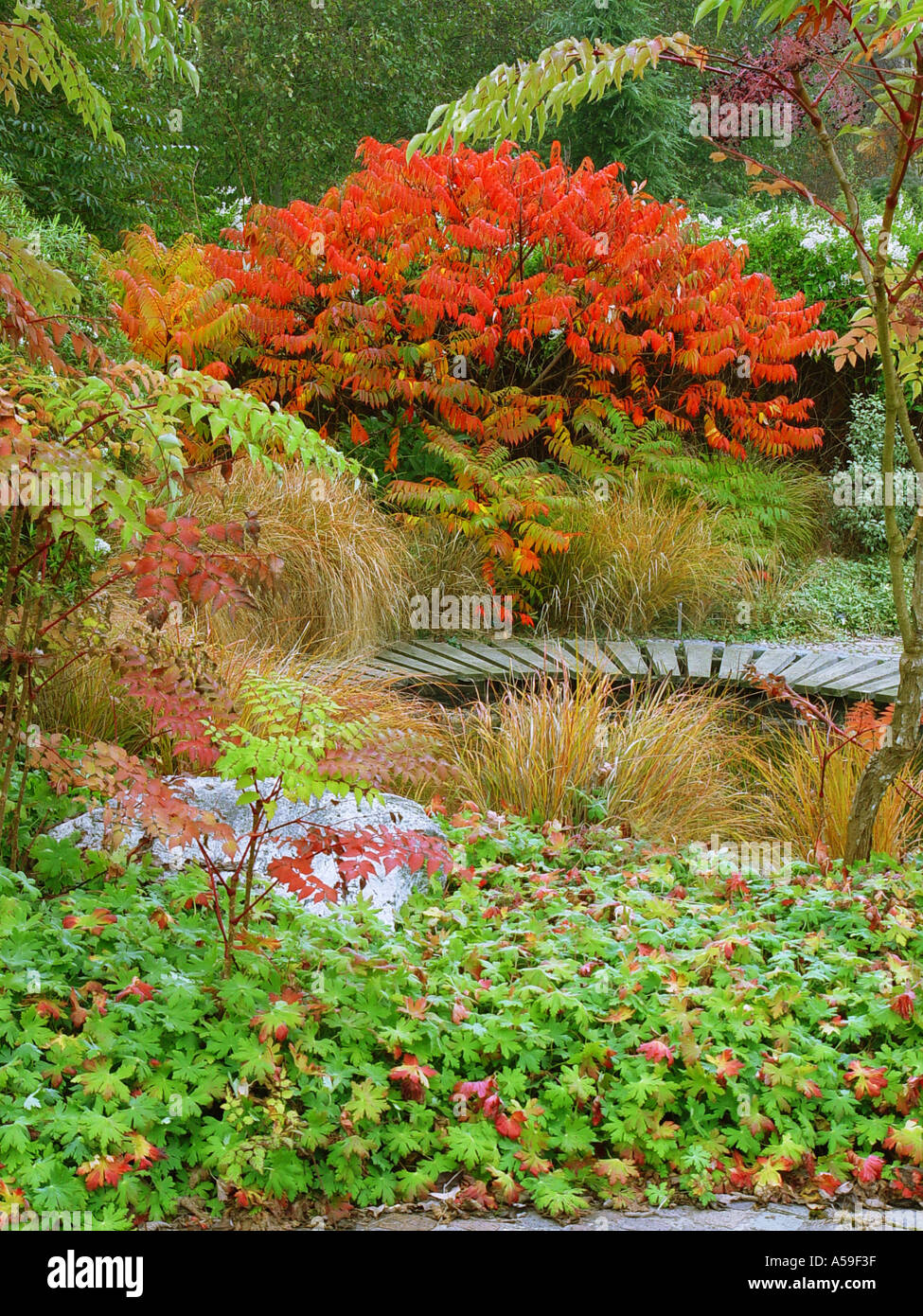Autumn Garden View Broadview Gardens Kent