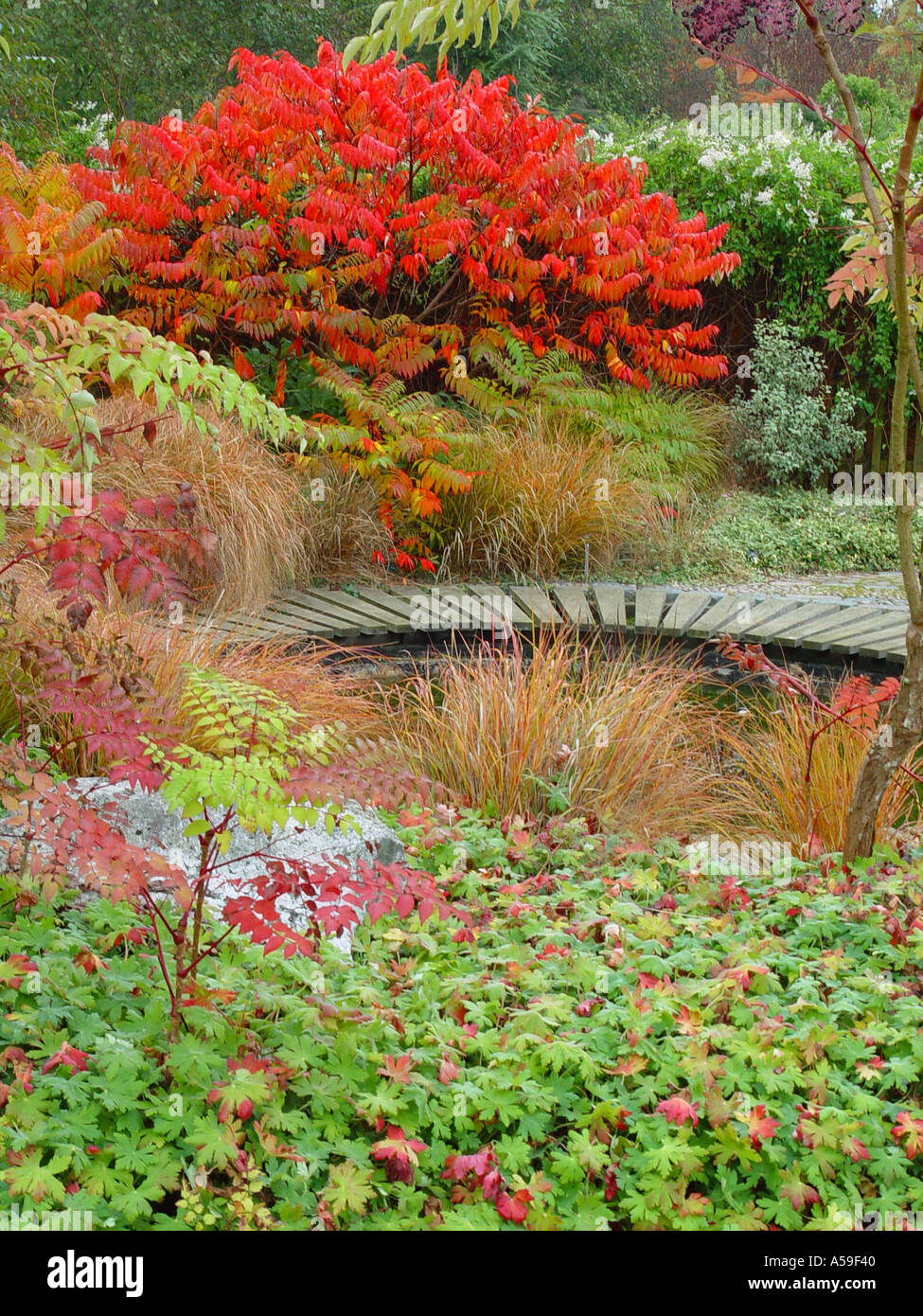Superior Autumn Garden View Broadview Gardens