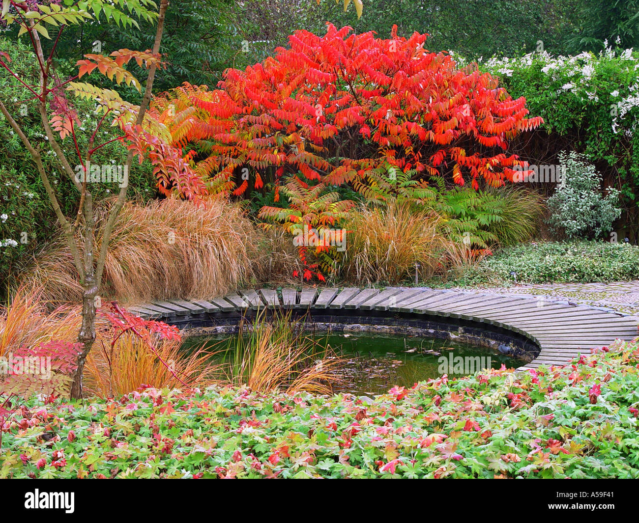 Autumn Garden View Broadview Gardens