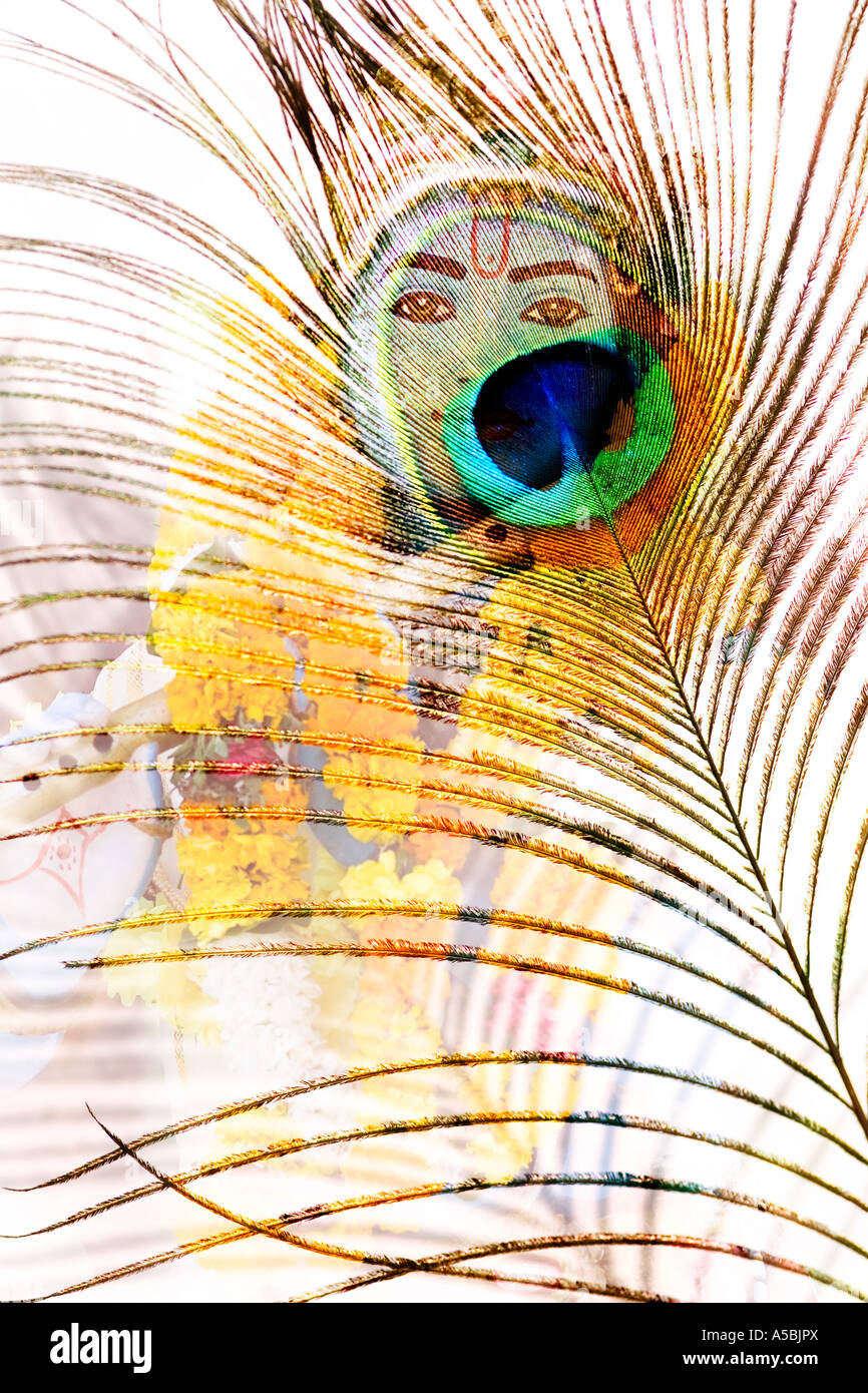 Lord krishna statue and peacock feather montage on white stock lord krishna statue and peacock feather montage on white biocorpaavc Gallery