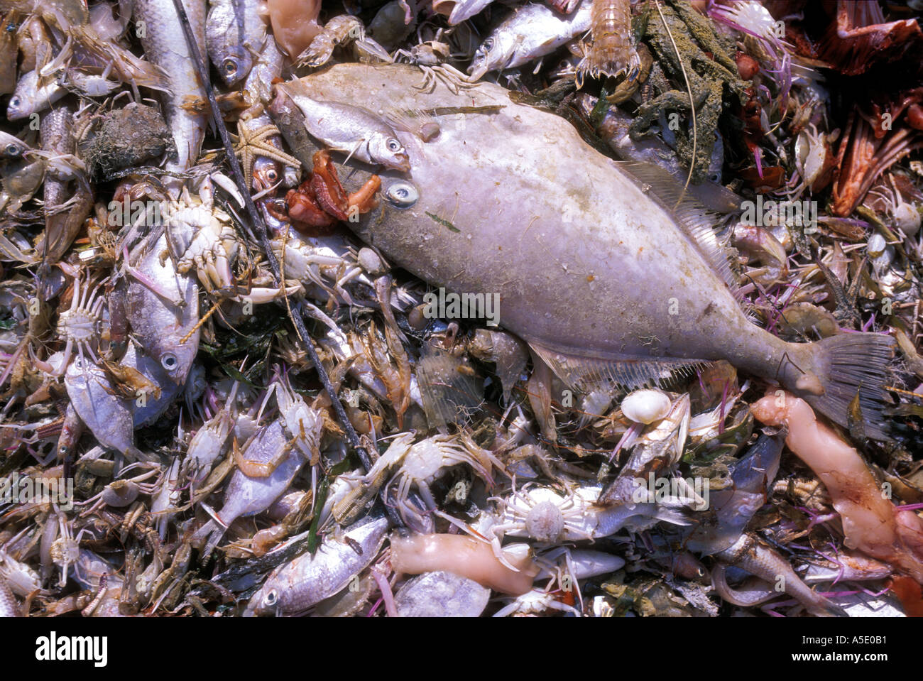 Image result for shrimp fish bycatch