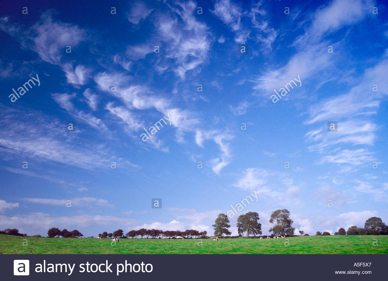 skyscape-of-clouds-and-trees-pembrokeshi