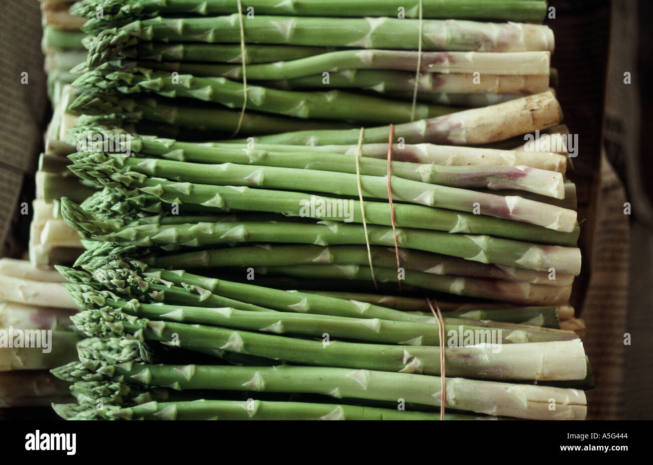 Bundles Of Cut Green Asparagus Tied And Ready To Cook In Thailand Fresh  From The Farm
