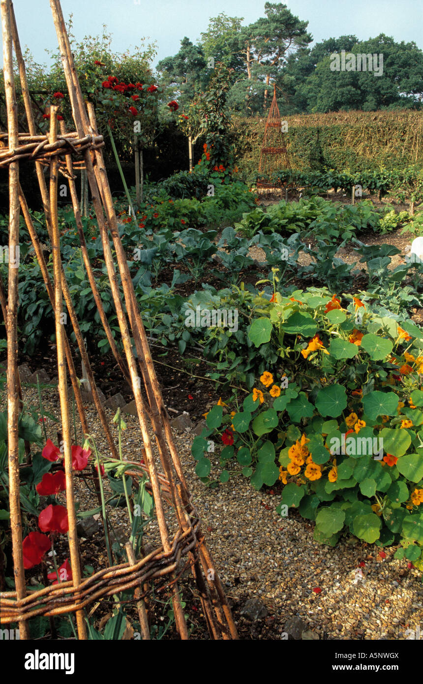 Country vegetable gardens - Willow Wigwam Frame And Nasturtiums Growing In Potager Vegetable Garden Stock Image