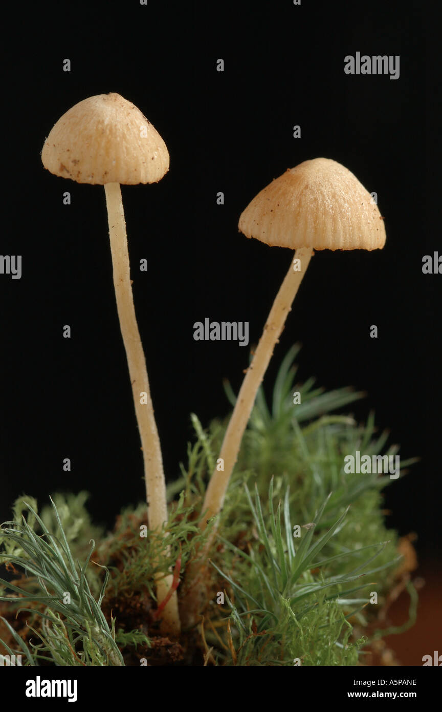 How to Identify Mushrooms