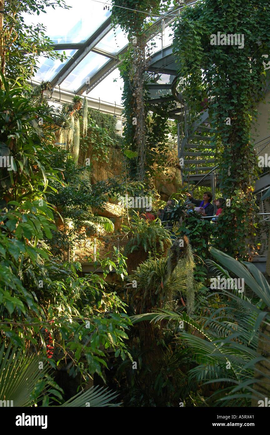 Im Regenwaldhaus Botanischer Garten Hannover Deutschland