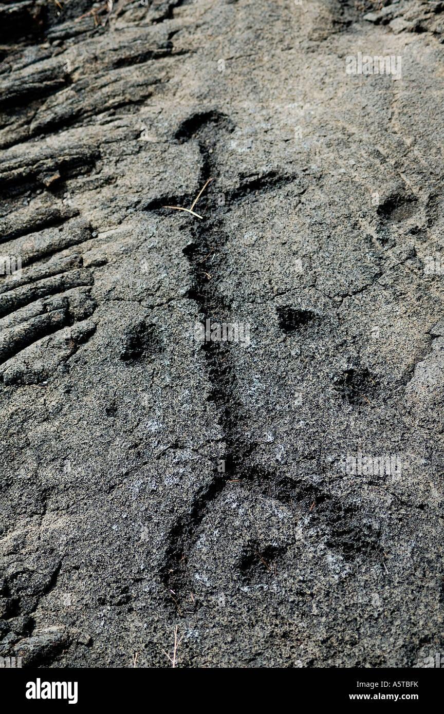 Petroglyphs stone carvings at hawaiian islands hawaii
