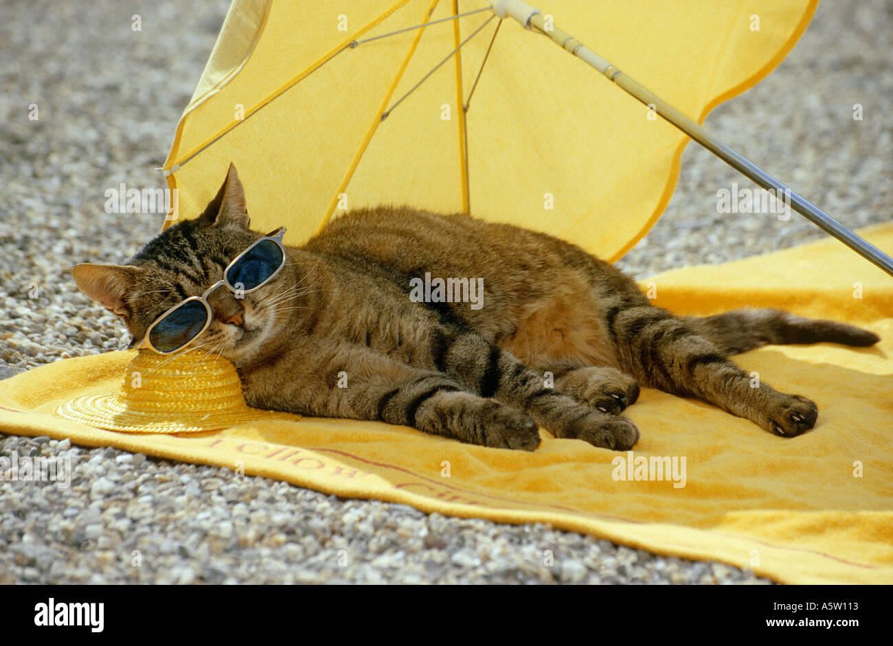 Cat Under Umbrella Www Pixshark Com Images Galleries