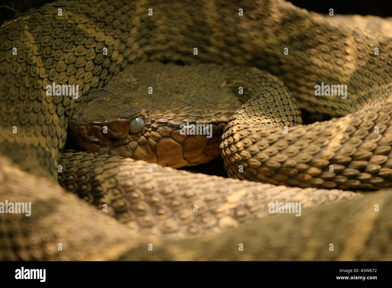 Deadliest Snakes  Most Venomous Snakes  Live Science