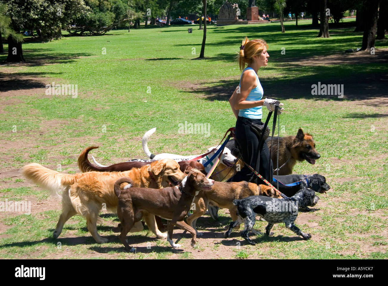Dog Walker At The Park In The Palermo Area Of Buenos Aires Stock Photo Royal