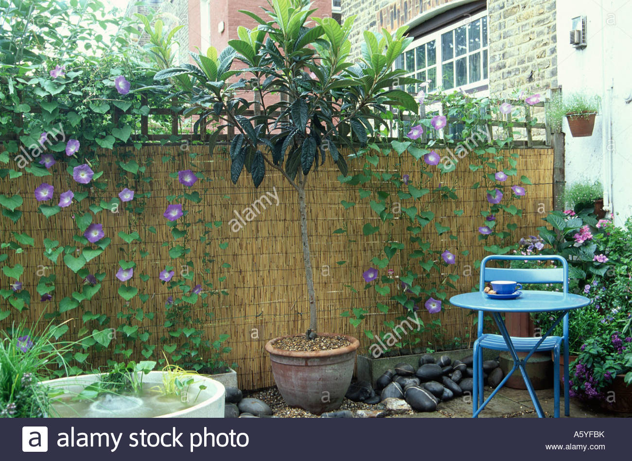 Stock Photo   Woven Fence At Of Small Patio Covered With Climbing Plants