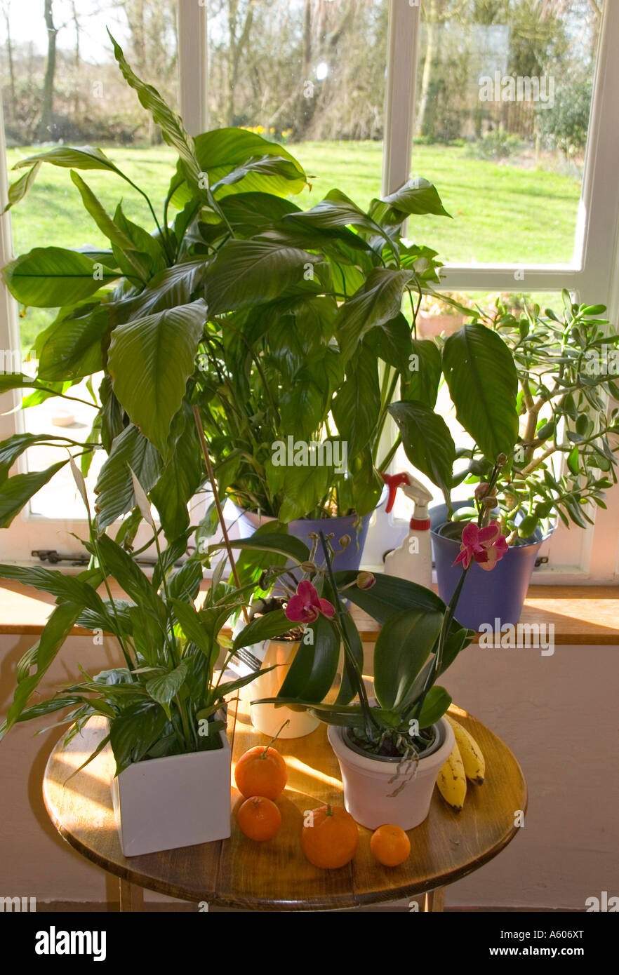 Pictures Of Exotic Flowering House Plants