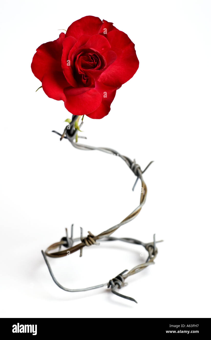 List of Synonyms and Antonyms of the Word: heart roses barbed wire