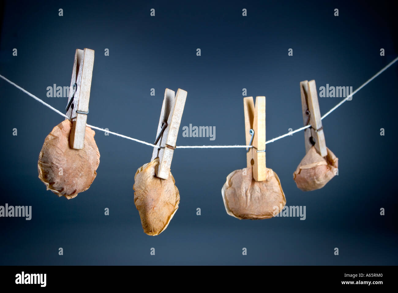 Recycled tea bags hanging on a line to dry Stock Photo ...