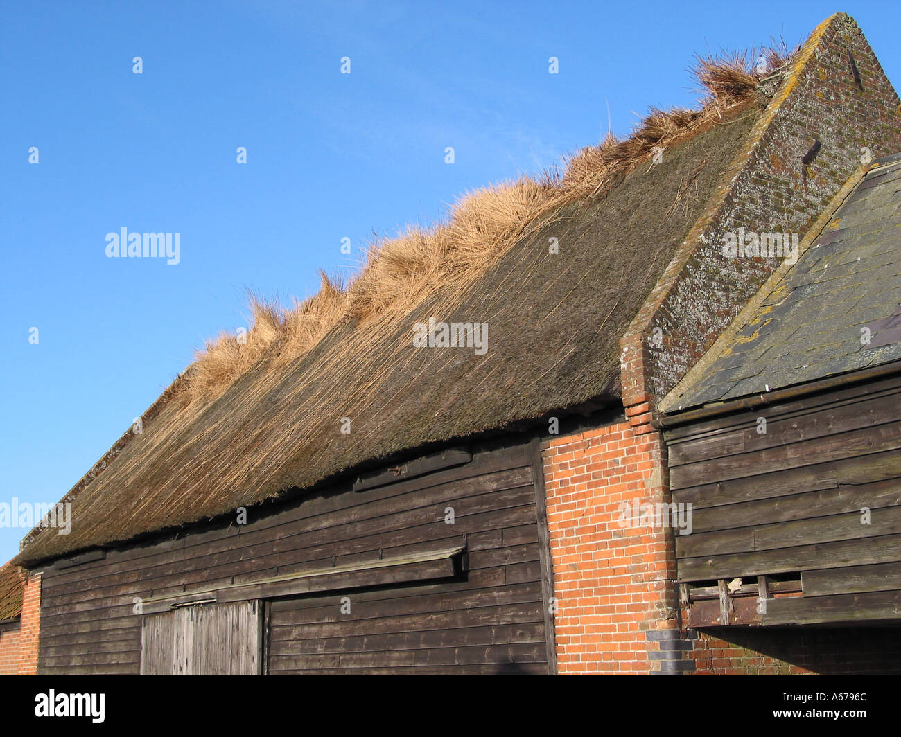 Traditional Suffolk Country Scene And Thatched Barn Architecture Showing Wind Damage To Thatch Herringfleet England