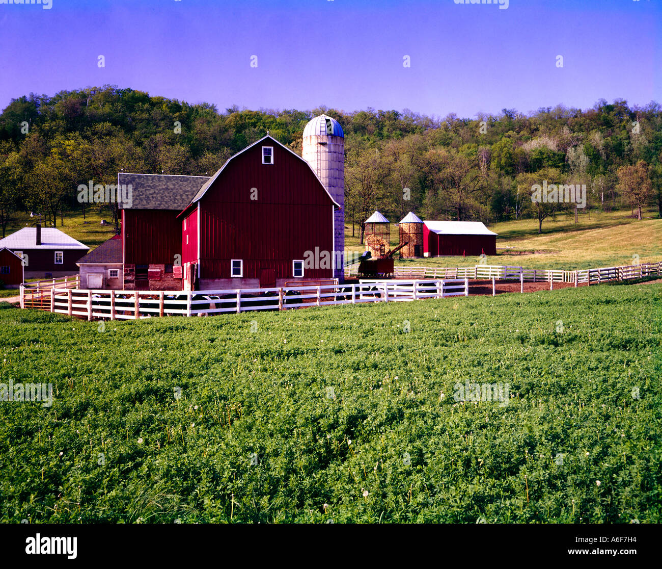 Cow on green pasture with red barn with grain silo royalty free stock - Stock Photo Wisconsin Dairy Farm With Red Barn Tall Storage Silo And Green Fields