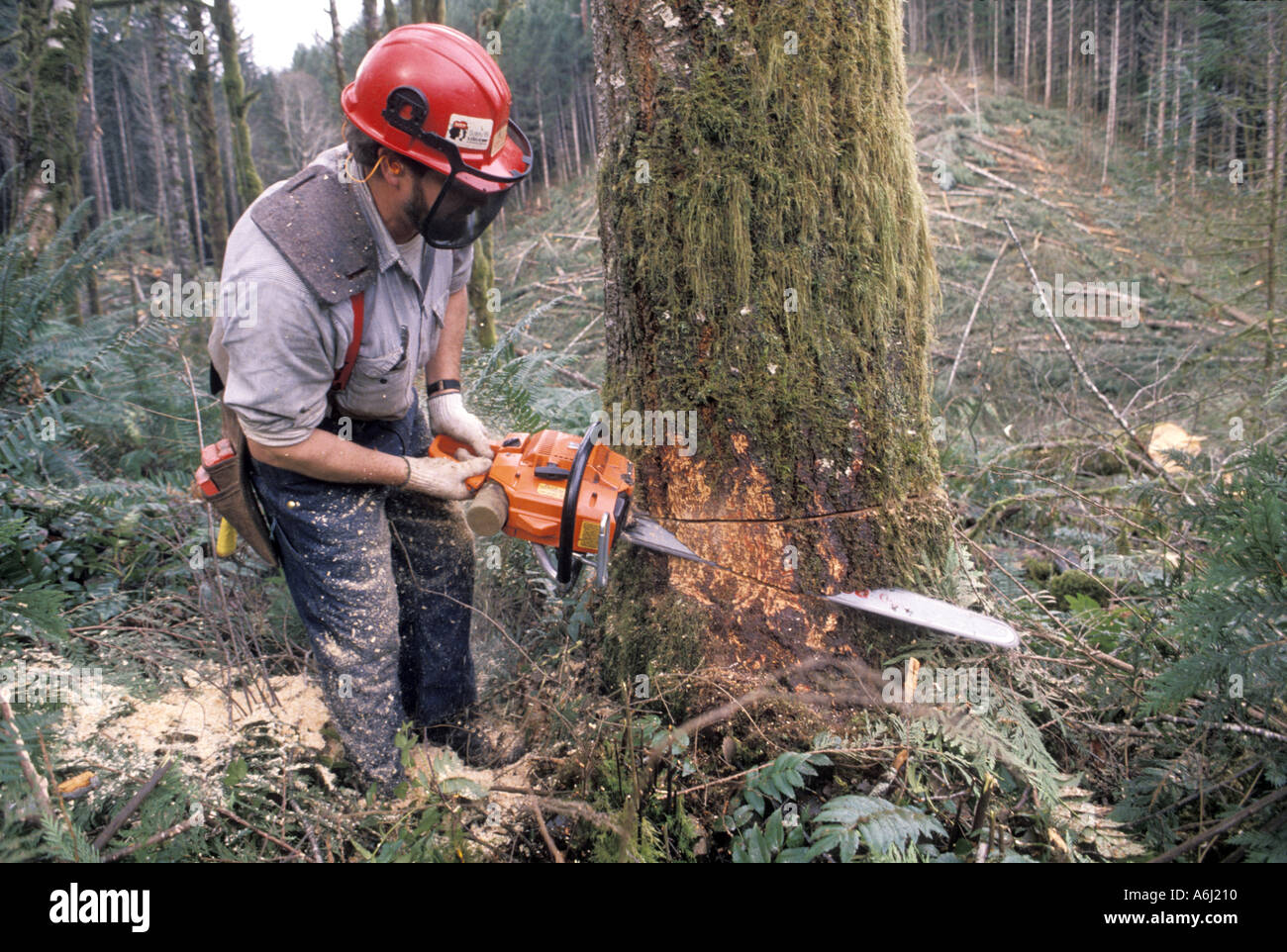 cutting down of trees essay Let's cut down the trees and build a factory on it to boost up our economy what  about the inner side of the planet earth can we see that the.