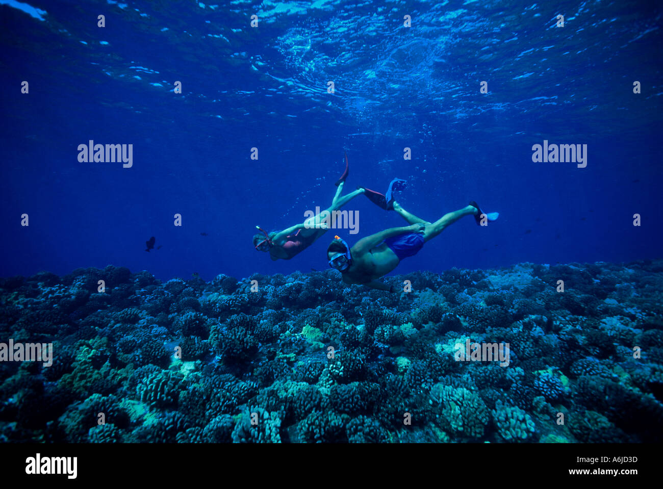 Woman Free Diving Down On A Coral Reef Royalty Free Stock ...
