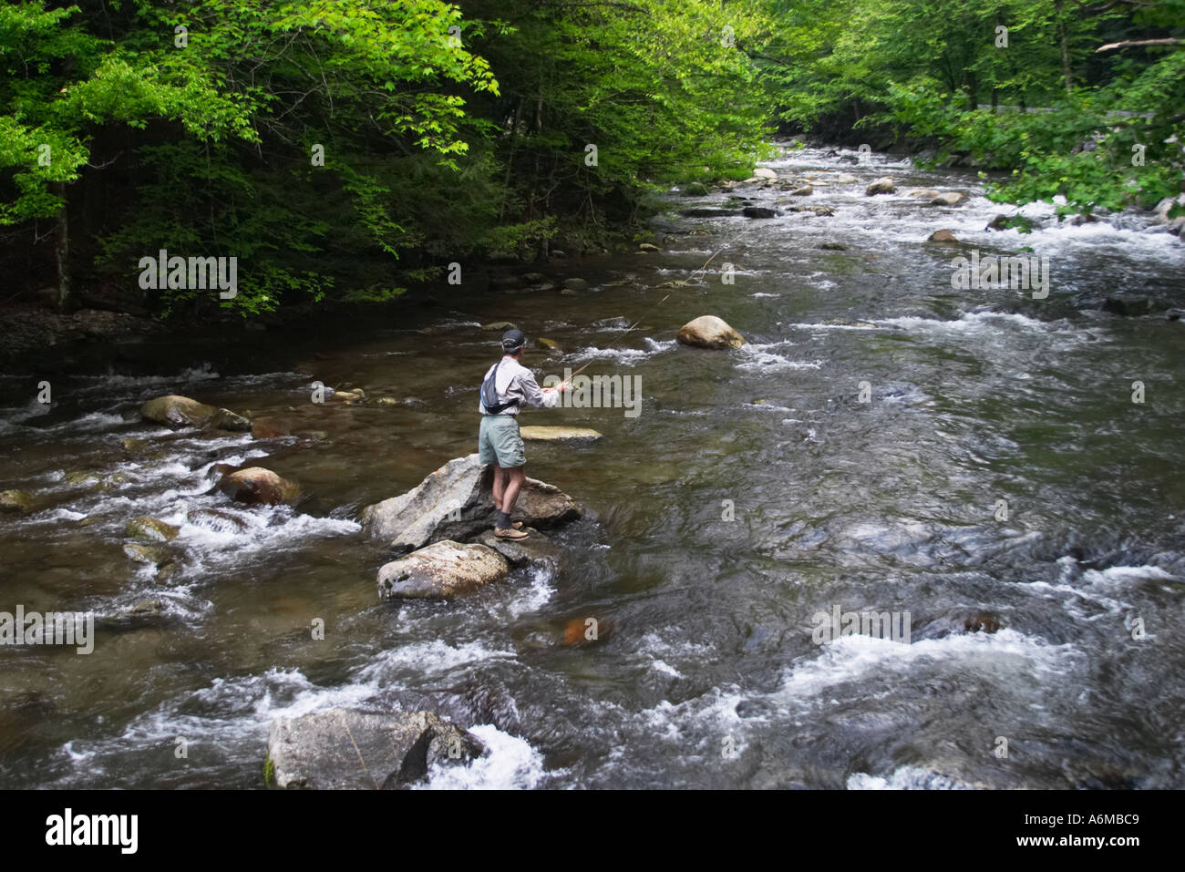Man fly fishing in a smoky mountain trout stream stock for Smoky mountain trout fishing