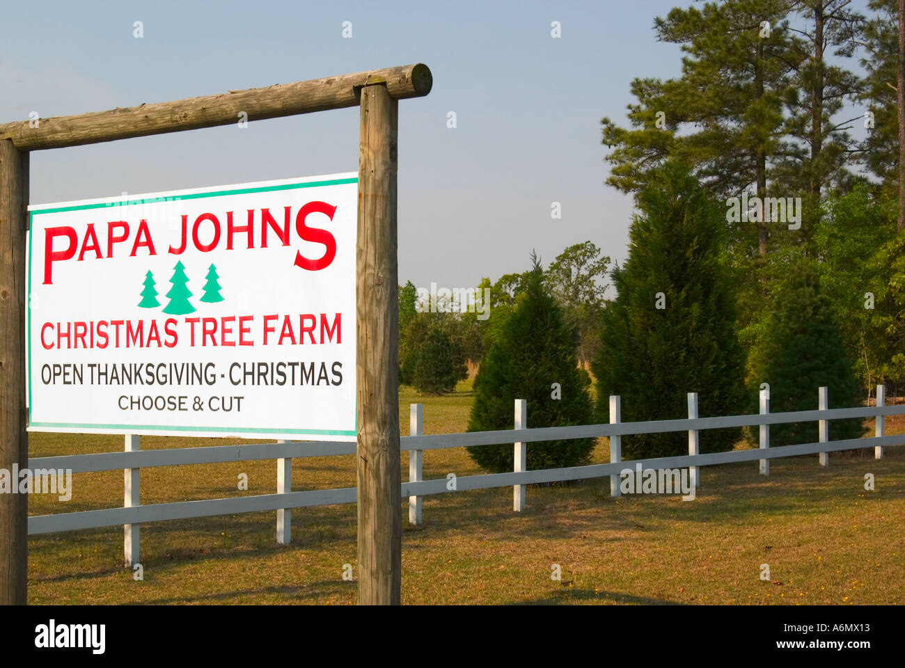 Papa Johns Christmas tree farm South Carolina USA Stock Photo ...