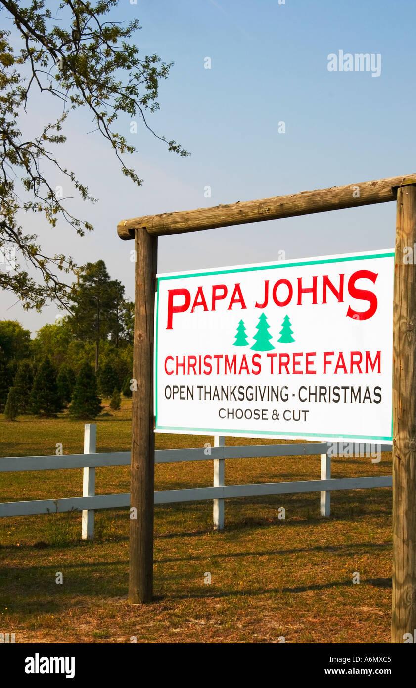 Christmas tree farm South Carolina USA Stock Photo, Royalty Free ...