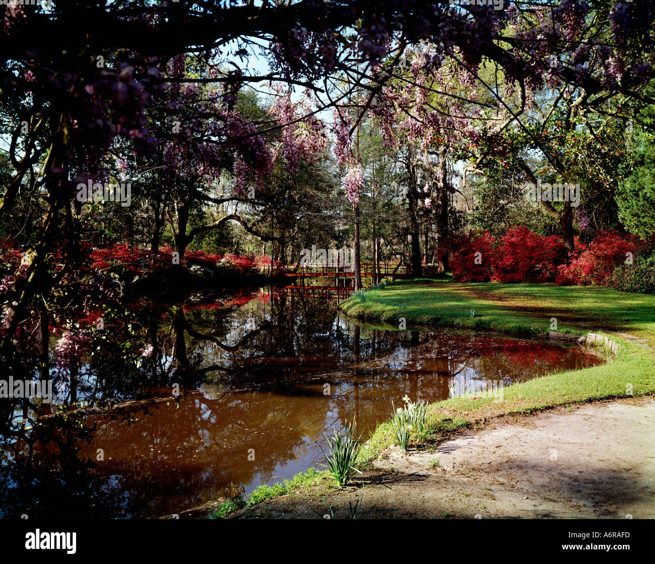 Magnolia Gardens Near Charleston In South Carolina With A Small Pond Stock Photo Royalty Free