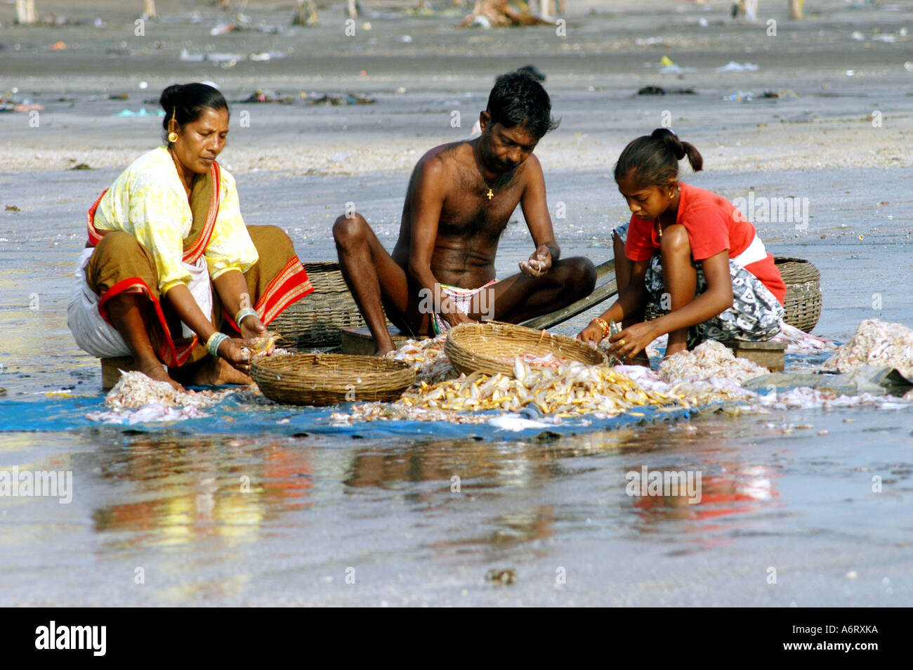 koli fishermans family sorting different varieties of fish for