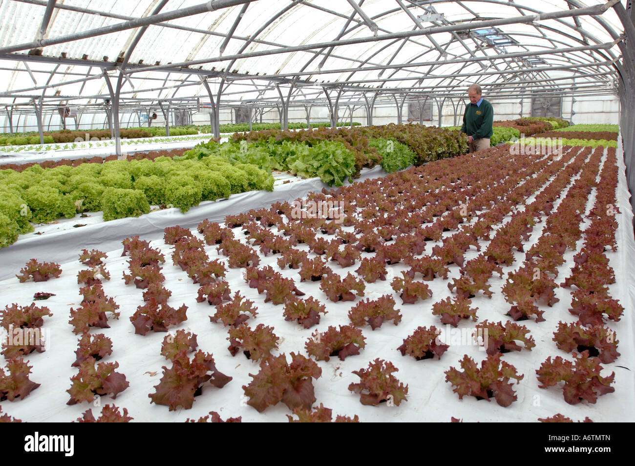 The greenhouse stanley -  Interior Of Stanley Growers And Nurseries Hydroponic Salad And Vegetable Growers In The Falkland Islands