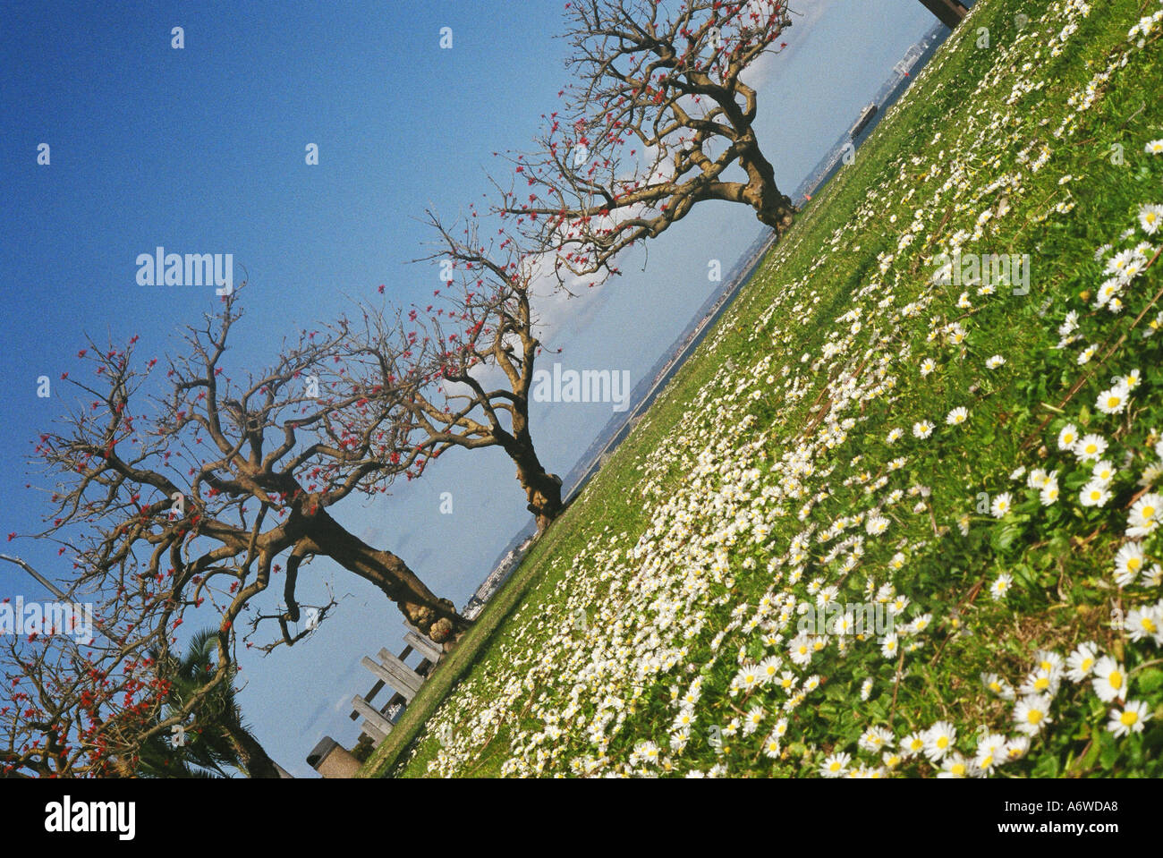 Two trees with grass and tiny white flowers stock photo royalty stock photo two trees with grass and tiny white flowers dhlflorist Image collections