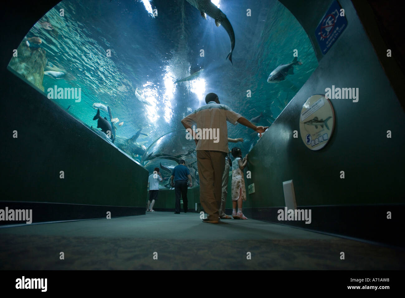 asia china shanghai visitors walk through glass tunnel of fish and