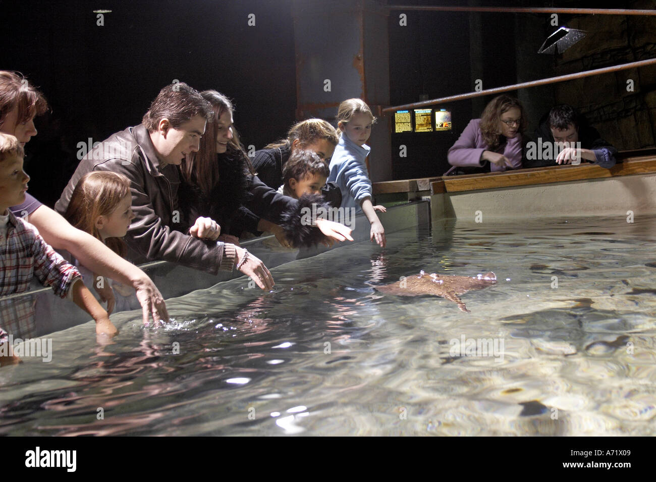 Buy fish for aquarium london - People And Families Watching Ray Fish Swimming And Trying To Tickle Them In The London Aquarium London Se1