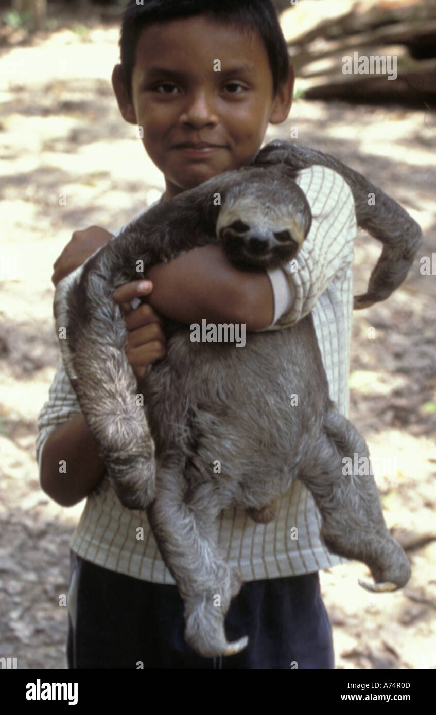 Worksheet 3 Toed Sloth For Sale brazil near manaus two toed sloth for sale stock photo royalty sale