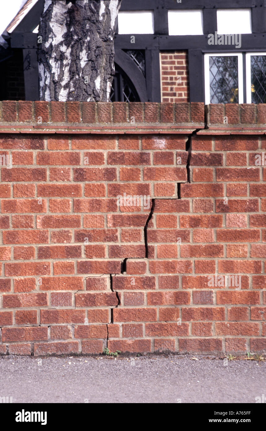 Essex England Severe Crack In Brick Boundary Wall Caused By Closeness Stock Photo 484863 Alamy