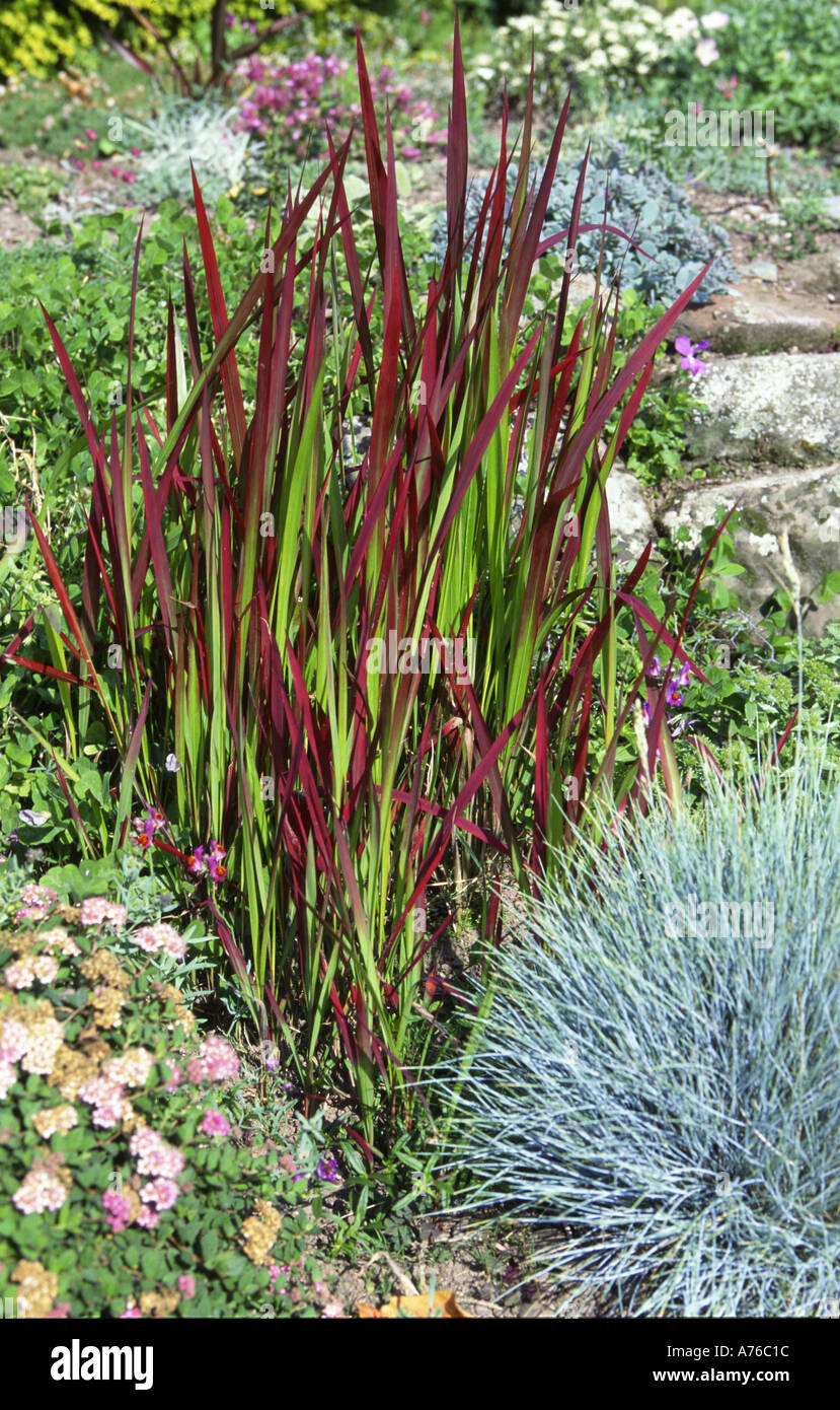 Ornamental grass images galleries for Small perennial grasses