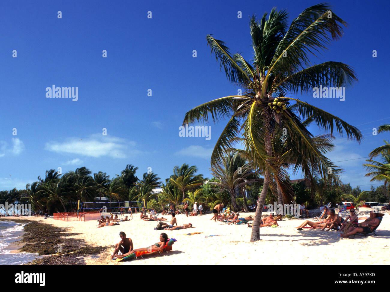 florida beach with palm trees. key west florida beach sea palm tree trees people with a