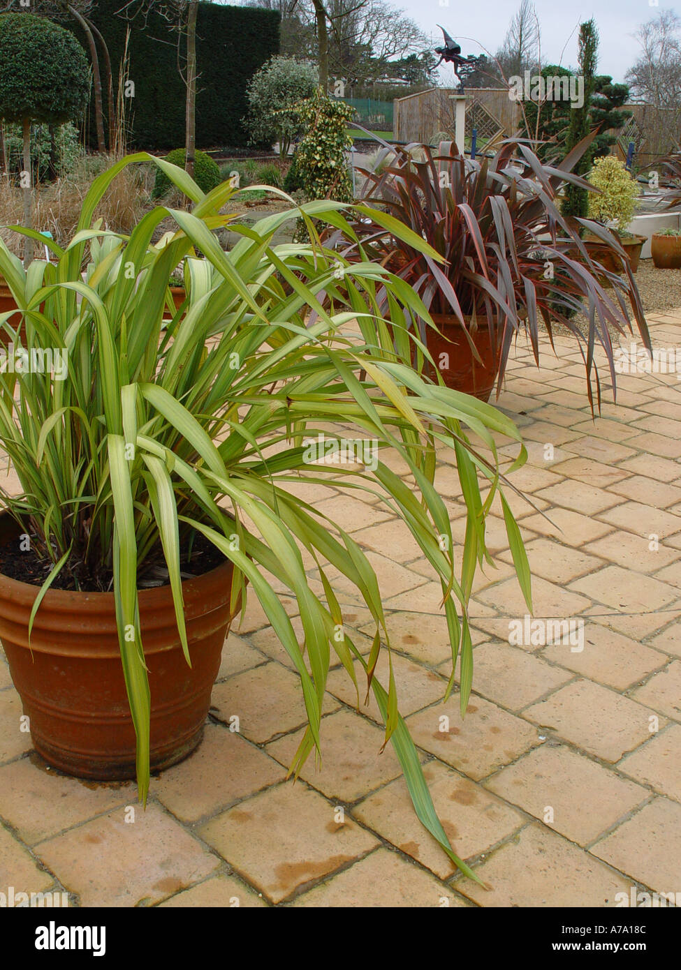 Planted Patio Pots Planters Containers Winter Effect With Phormiums At  Wisley RHS Garden
