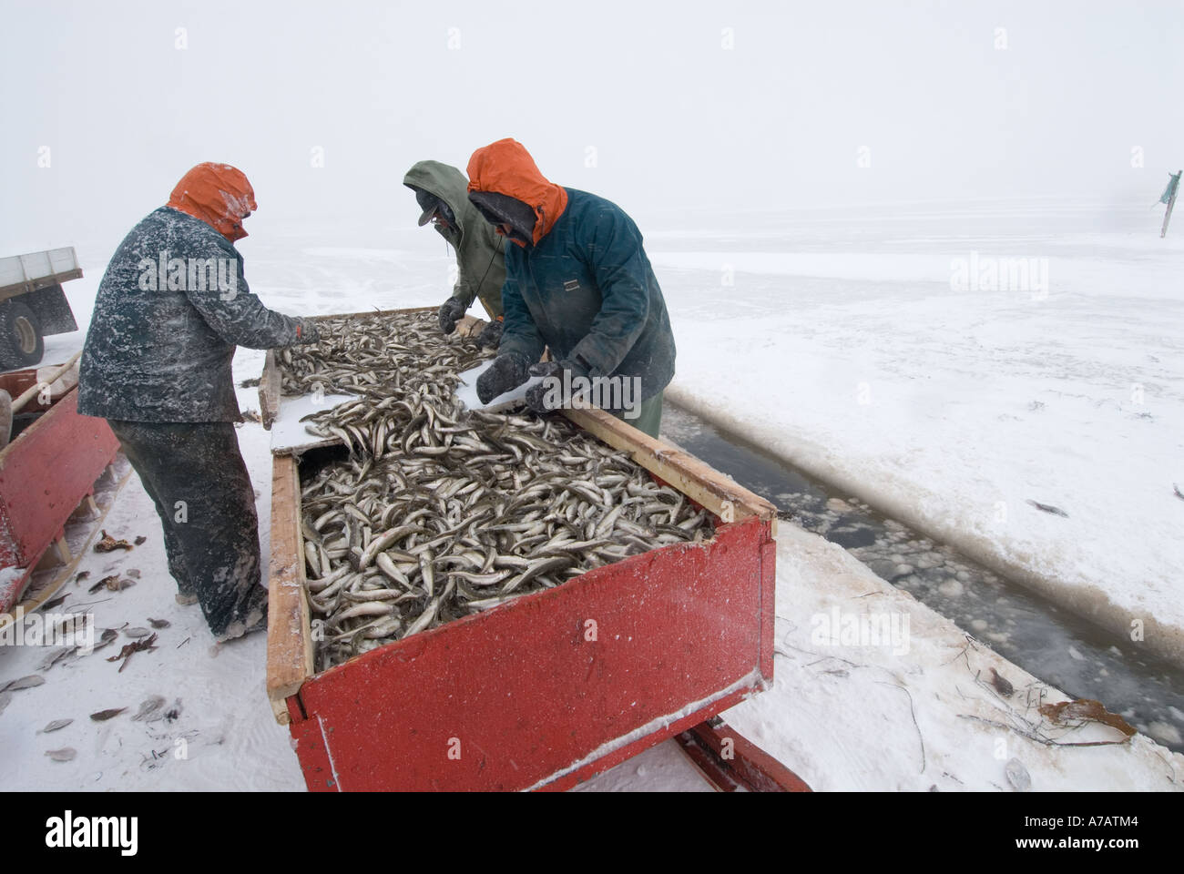 Smelt Fishing through the ice on a freezing cold winter ...
