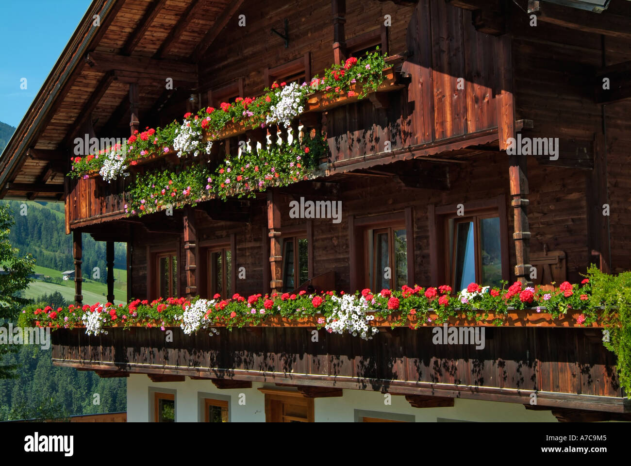 traditional house window boxes albach tyrol austria stock