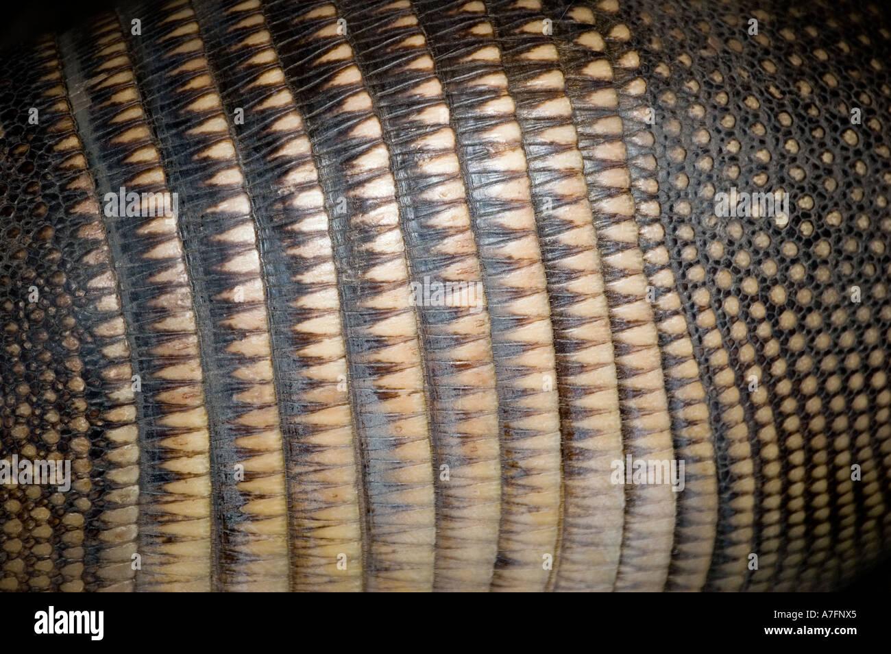 Armadillo shell