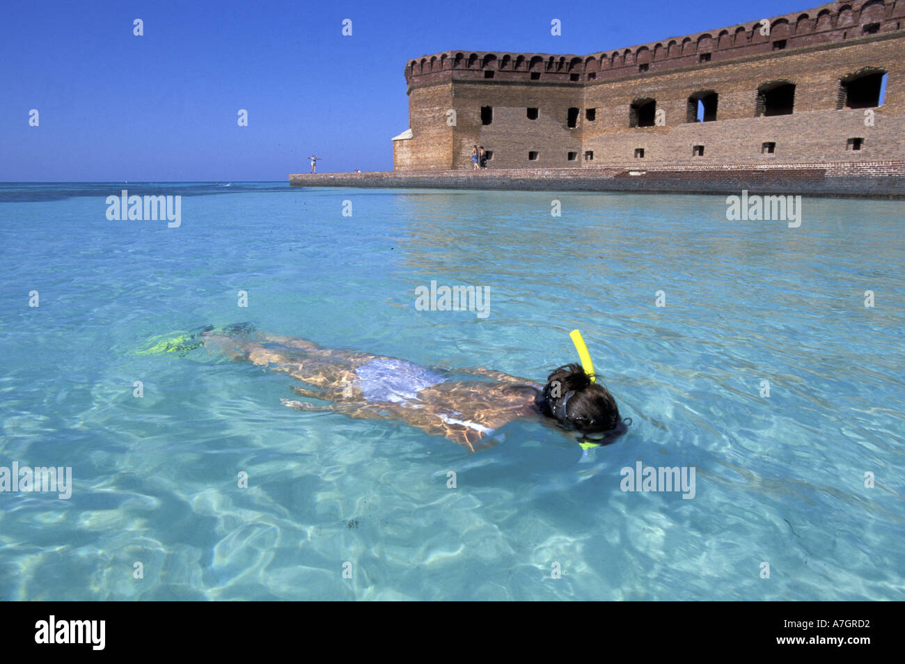 U S A Florida Dry Tortugas Garden Key Snorkling At Fort Jefferson Stock Photo Royalty Free