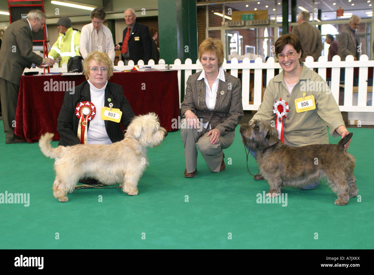 Glen of imaal terrier challenge certificate winners with judge at glen of imaal terrier challenge certificate winners with judge at the national terrier championship dog show 2007 thecheapjerseys Image collections