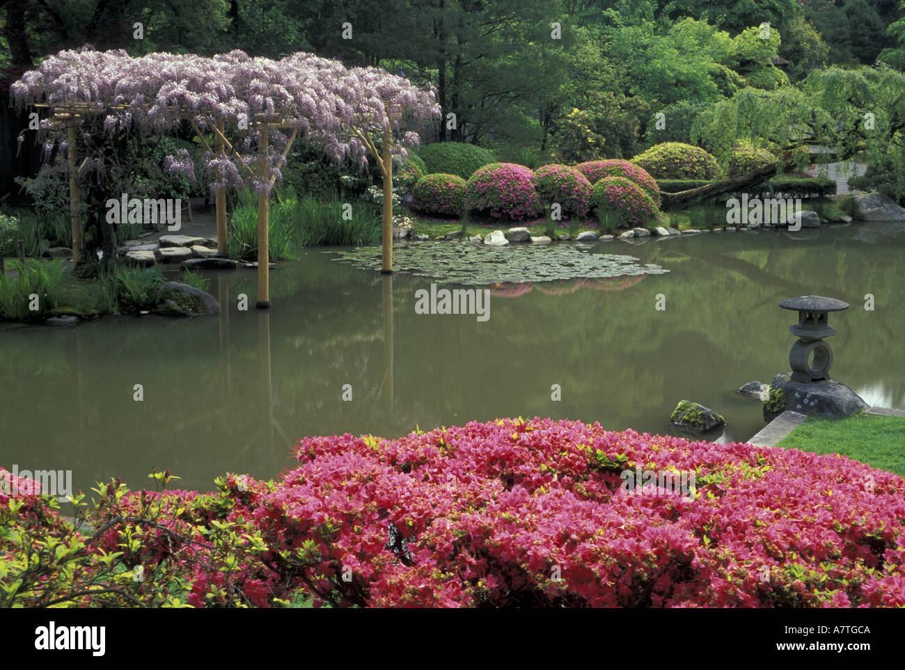 USA, Washington, Seattle, Washington Park Arboretum, Japanese Garden,  Spring, Rhododendrons And Wysteria