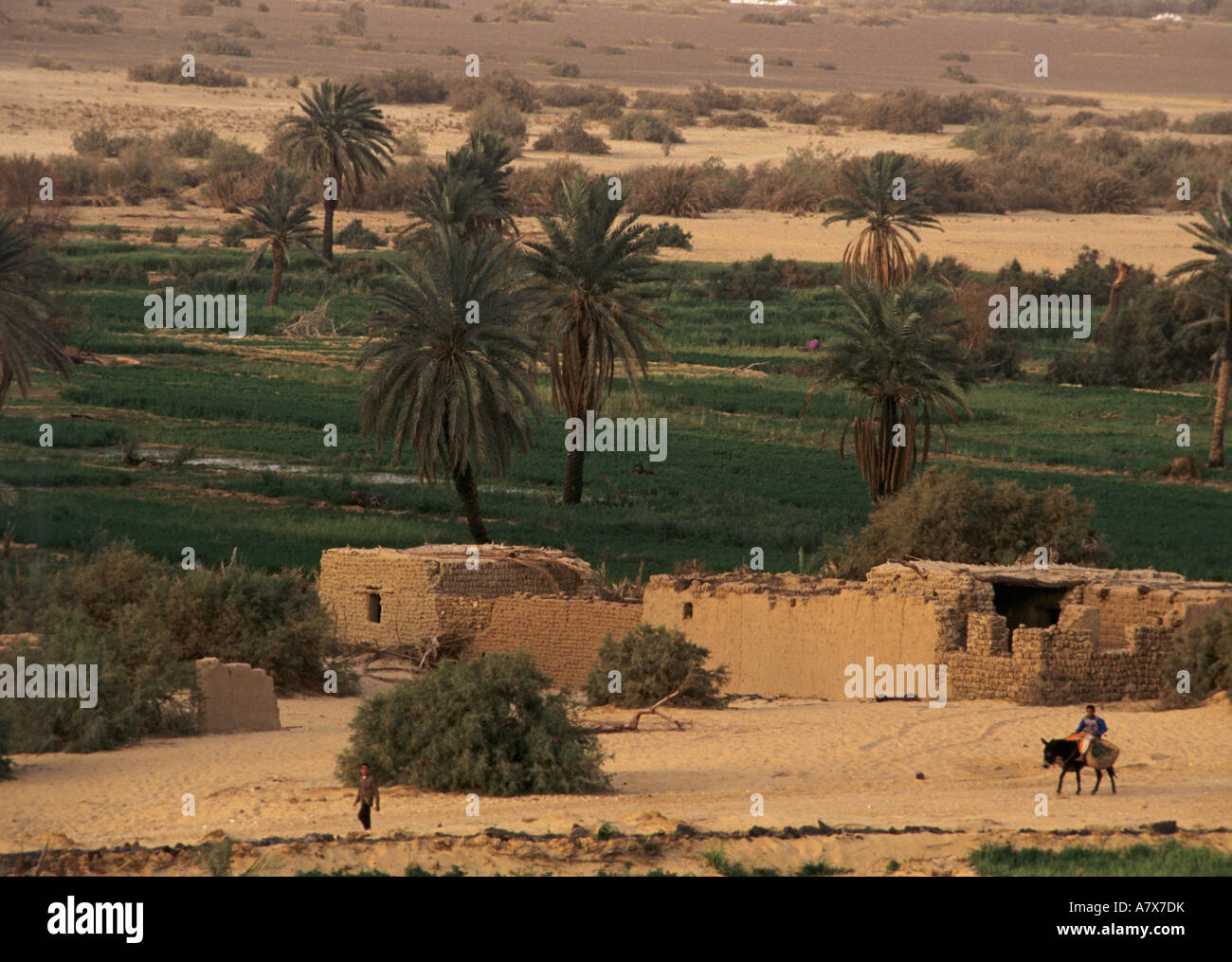 Egypt, Modern farm in El Bawati, capital of Bahariya Oasis ... - photo#38