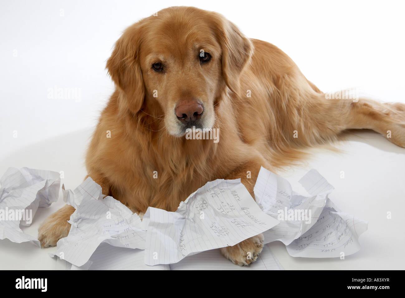 Dog Eat Homework